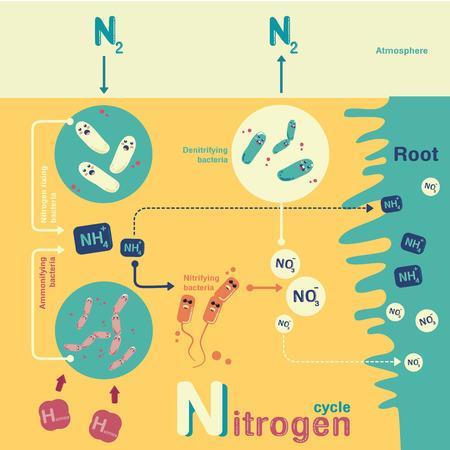 amoniaco: Nitrogen cycle in-fographic cartoon vector