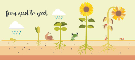 part frog: From seed to seed plant growth proccess illustration design