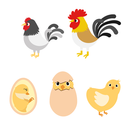 Chicken egg life cycle and anatomy illustration vector