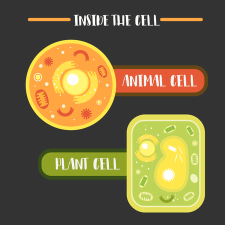 Inside the animal plant cell structure illustration vector