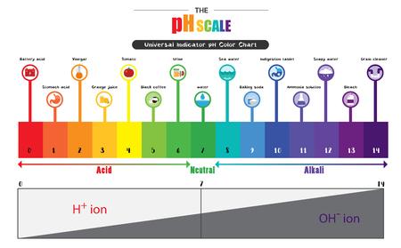 L'échelle de pH Indicateur universel pH Diagramme de couleur diagramme des valeurs alcalines acides substances communes illustration vectorielle conception d'icône plate colorée Banque d'images - 81803308