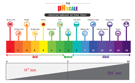 The pH scale Universal Indicator pH Color Chart diagram acidic alkaline values common substances vector illustration flat icon design Colorful Stok Fotoğraf - 81803308