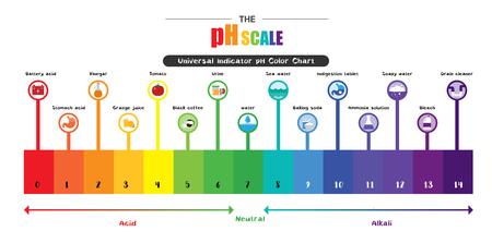 Skala pH Uniwersalny wskaźnik pH Kolor Wykres diagramu kwaśne wartości alkaliczne wspólne rysunki substancji ilustracja płaska ikona Kolorowe