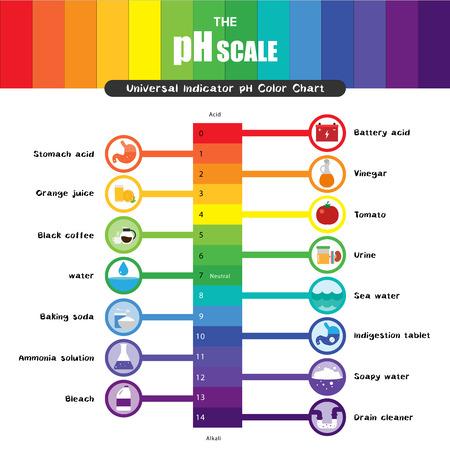 De pH-schaal Universele indicator pH-kleurkaartdiagram zure alkalische waarden gemeenschappelijke stoffen vectorillustratie plat pictogramontwerp Kleurrijk