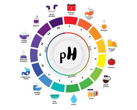 acido: La escala del pH Indicador universal pH Color Diagrama diagrama ácidos alcalinos valores comunes sustancias vectoriales ilustración plana icono de diseño Colorido Vectores
