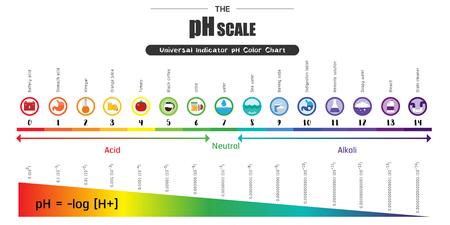 pH 규모 범용 지표 pH 색 도표 다이어그램 산성 알칼리성 값 일반적인 물질 벡터 일러스트 레이 션 플랫 아이콘 디자인 다채로운
