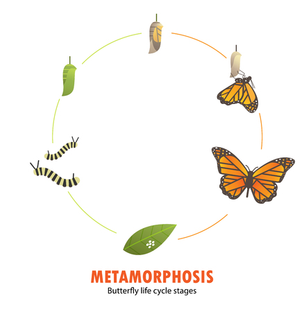 Butterfly life cycle metamorphosis.