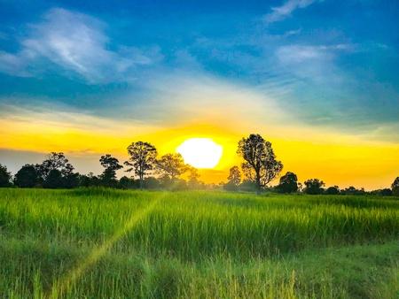 Sun golden