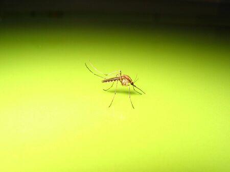 mosquito Stock Photo - 698962