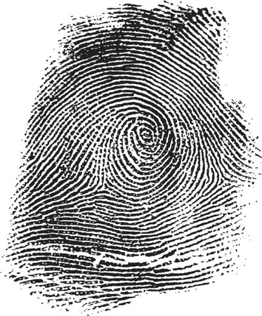 bifurcation: fingerprint illustration Illustration