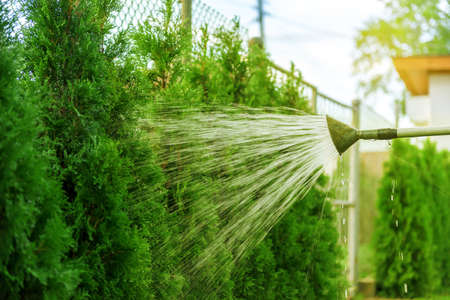 watering the garden from hose on sunny day