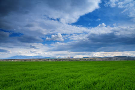 bright green field under a sky with clouds in spring Stock Photo