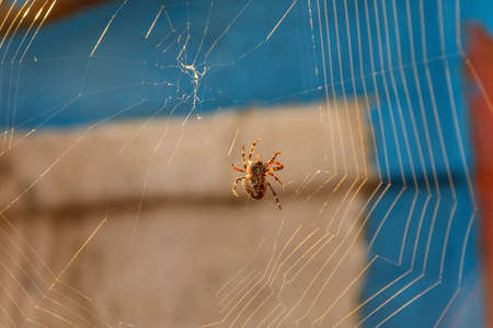 Little silhouette spider on web at sunset. Macro close up