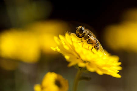 sun energy: A bee is busy pollenating flowers as it goes about its job collecting pollen.