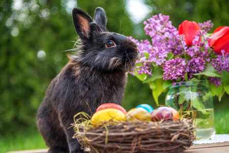 Easter bunny with eggs on wooden background.