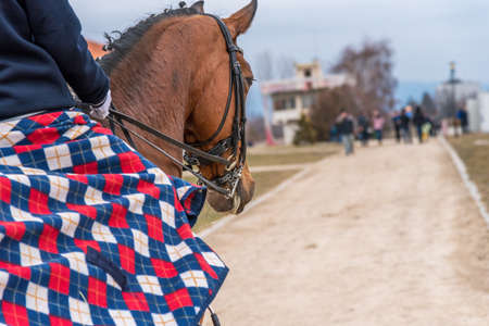 Horse in close-up in the dressage competition at the tournament course. Фото со стока