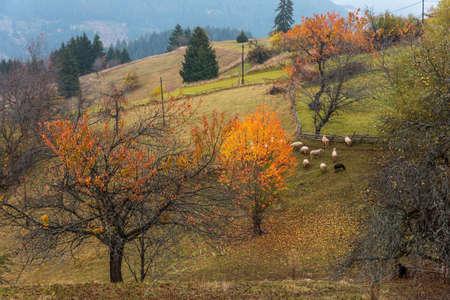 Flock of sheep in autumn nature in Bulgaria.