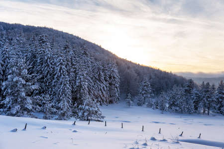 Snowy landscape at sunset, frozen trees in winter in Bulgaria.