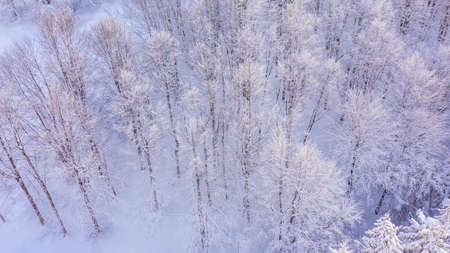 Aerial view of the forest at winter. The trees are covered with snow.