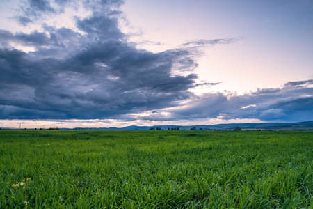 Vast green field at gorgeous sunset, a colorful panoramic landscape.