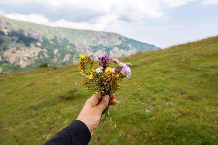 A small bouquet of mountain flowers in a womans hand on a green blurred