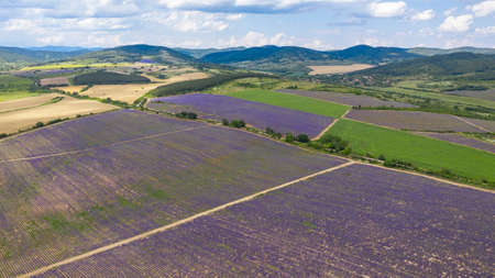 Aerial panorama view of big lavender meadow.