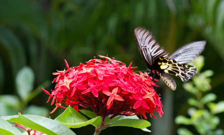 nature,  insect,  background,  summer,  beauty,  beautiful Stock Photo