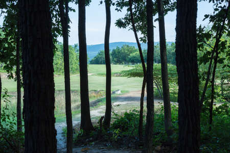 hole in one: in the woods