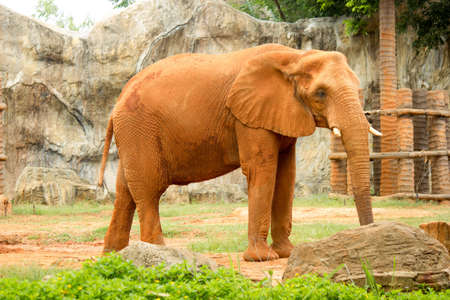 elephant,  animal,  wildlife,  mammal,  nature,  wild,  africa