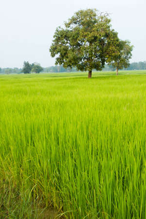 agriculture, rural,  field,  nature