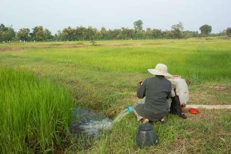 View and farmers in rice