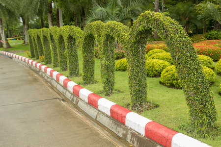 Green arch made by grass in thailand Stock Photo