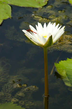 water,  flower,  lily,  nature,  pond,  lotus,  plant
