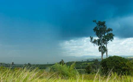 rain,  nature,  wet,  water,  beautiful,  landscape,  rainier,  mount,  mountain