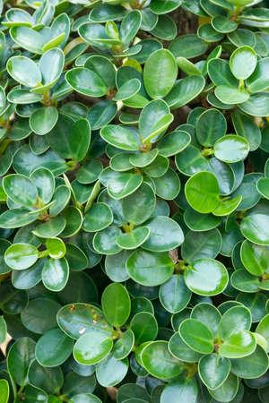 leaf, background, nature, green, leaves, autumn, natural, season, fresh