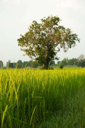 agriculture, rural,  field,  nature,  green,  farming,  summer,  landscape Stock Photo