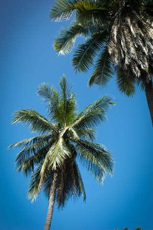 coconut,  tropical,  palm,  nature,  tree,  beach,  blue,  travel,  sky