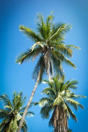 coconut,  tropical,  palm,  nature,  tree,  beach,  blue,  travel,  sky Stock Photo - 16064007