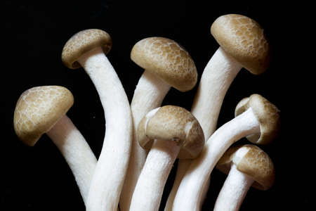 Mushrooms are beautiful plants  And cooking  It s delicious