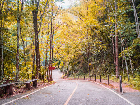 Road into the forest, trekking trail, with sunlight shinning trough top of the trees, yellow and green leaves during the spring time. Stock Photo