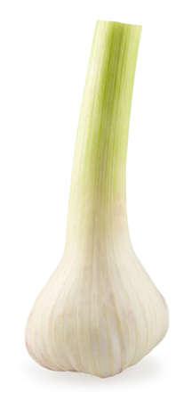 Head of the young fresh garlic