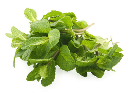 Green mint on white background Stock Photo