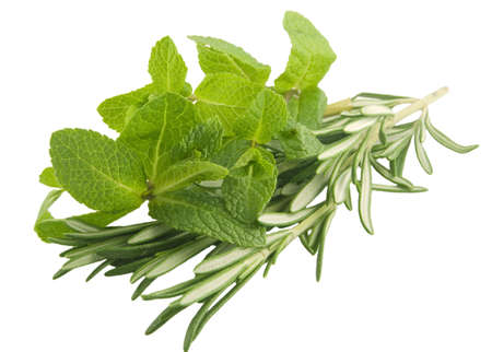 Mint and rosemary branches on white background Stock Photo
