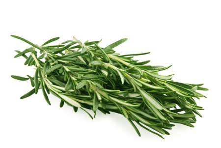 Rosemary branch on white background