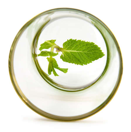 Leaf mint on glass symbol of healthy life