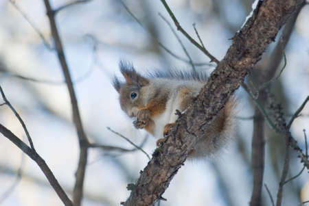 Squirrel on branch photo