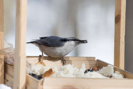 bird from the seed in the beak sits in the feeding trough Stock Photo