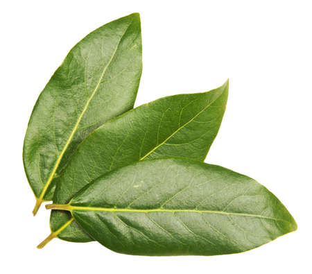 Three green laurel leaves on white background Stock Photo