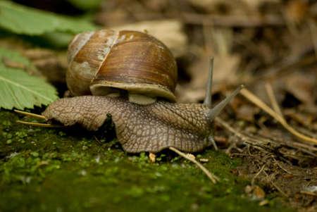 babosa: Slug