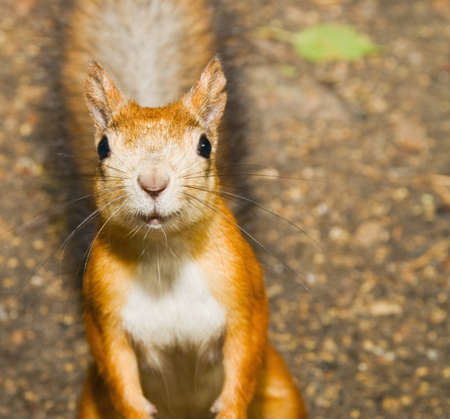 reflectance: Squirrel looks at you Stock Photo